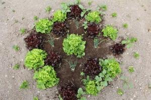 l'école des petits jardiniers