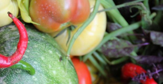 legume_automne