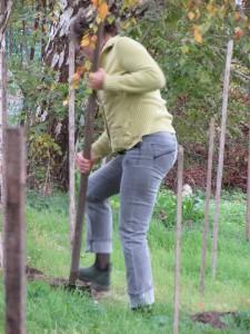 MNJ 05-11-15 Françoise et trous de plantation