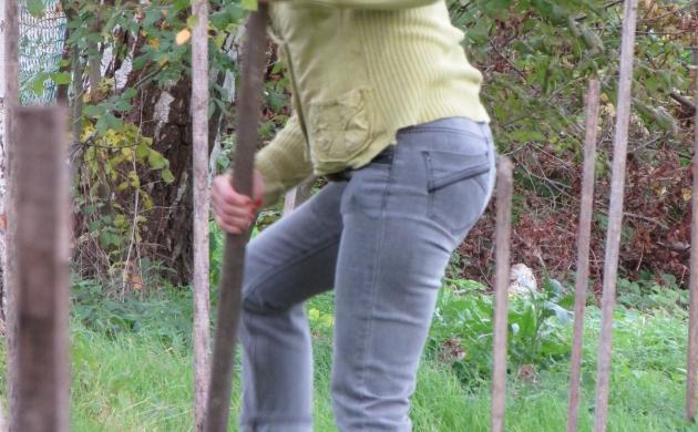 La plantation des arbustes et des arbres