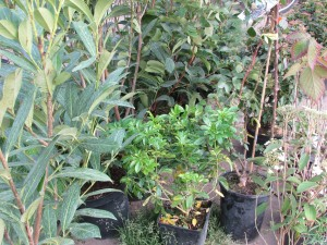 2015-11-18 13.47.37 - plantation - les plants