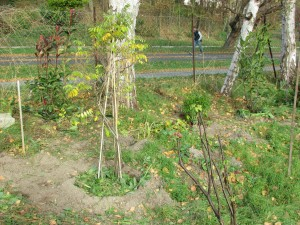 2015-11-18 13.42.28 - plantation